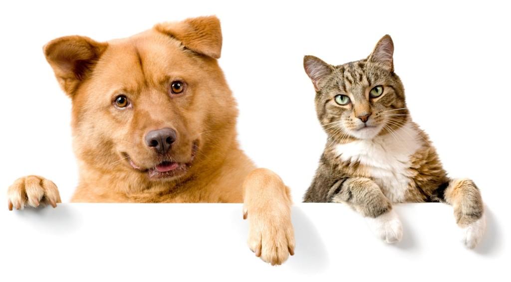 Negocios rentables mascotas